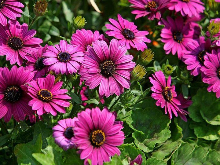 Красивые цветы, которые можно посадить у себя на дачном участке 6