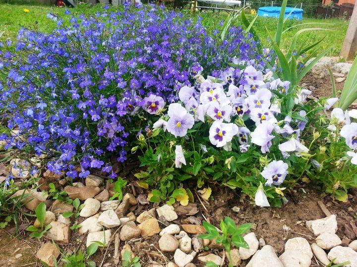 Красивые цветы, которые можно посадить у себя на дачном участке 9
