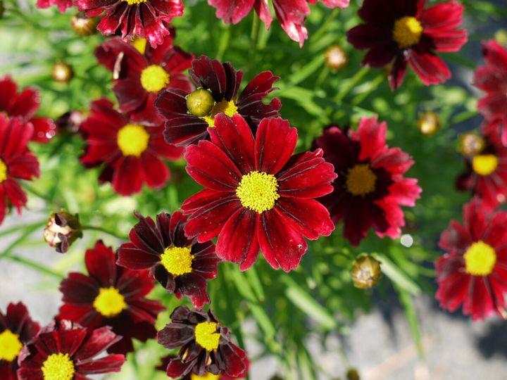 Красивые цветы, которые можно посадить у себя на дачном участке 15
