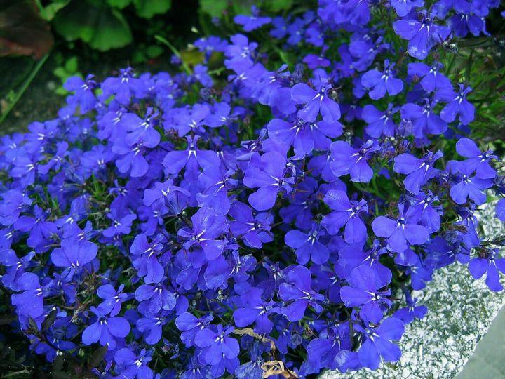 Красивые цветы, которые можно посадить у себя на дачном участке 7