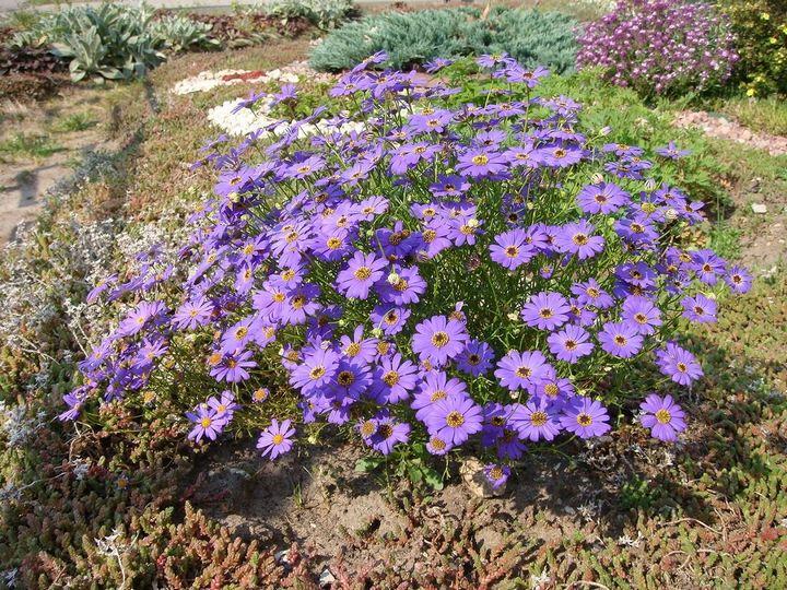 Красивые цветы, которые можно посадить у себя на дачном участке 16