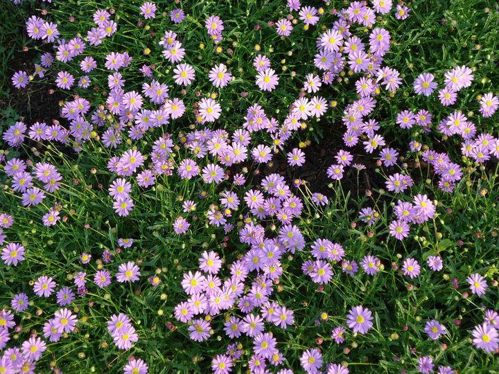 Красивые цветы, которые можно посадить у себя на дачном участке 17