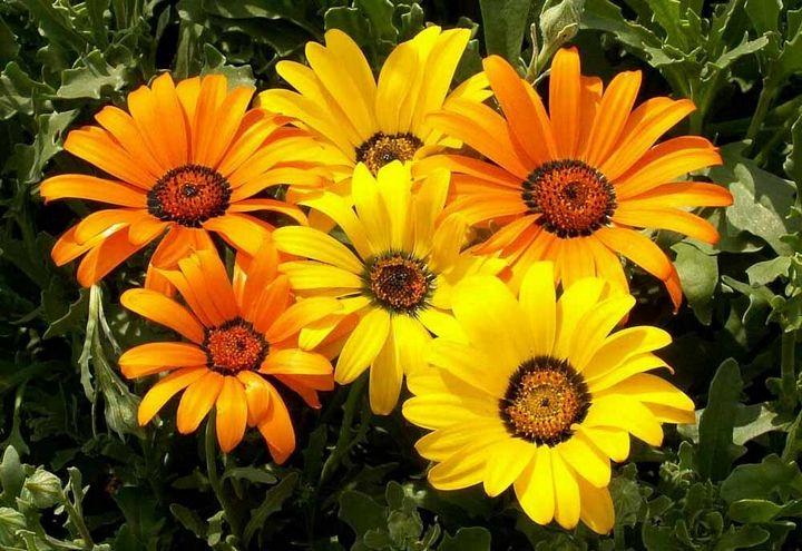 Красивые цветы, которые можно посадить у себя на дачном участке 4