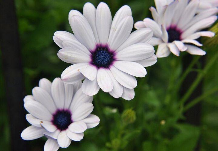 Красивые цветы, которые можно посадить у себя на дачном участке 5