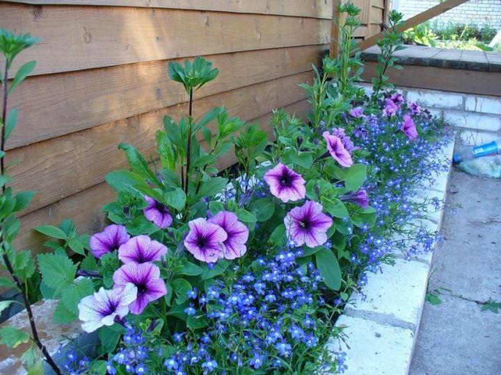 Красивые цветы, которые можно посадить у себя на дачном участке 8