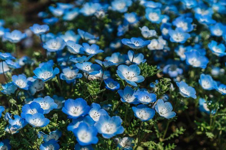 Красивые цветы, которые можно посадить у себя на дачном участке 11