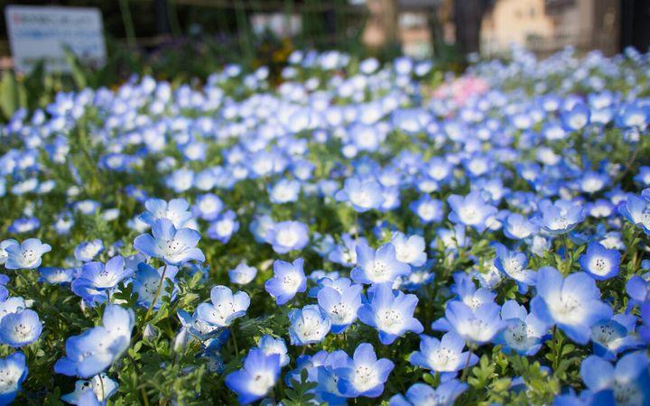 Красивые цветы, которые можно посадить у себя на дачном участке 12