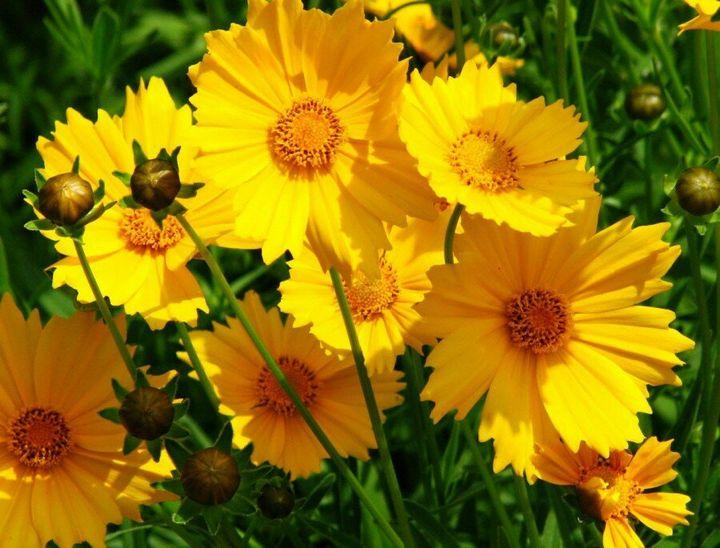 Красивые цветы, которые можно посадить у себя на дачном участке 14