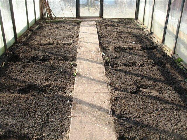 Легкий способ подготовить почву в теплице к посеву ранней весной 3