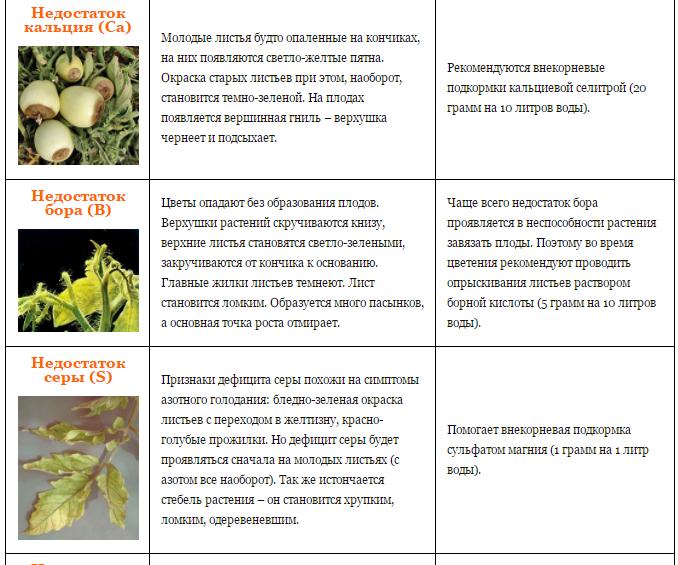 Нехватка кальция у растений, способы быстрого решения проблемы 2