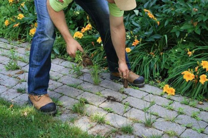 Нетрудные методы избавления от травы на садовых дорожках 2