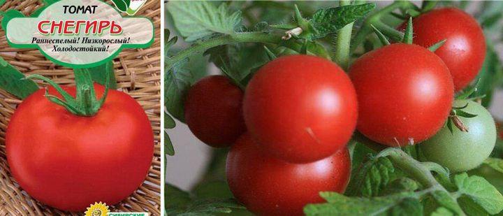 Пятёрка лучших сортов низкорослых томатов для высадки на огороде 2