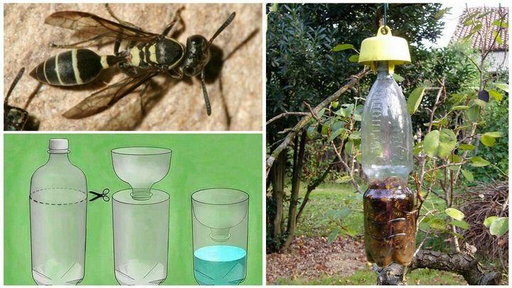 Пластиковая бутылка - поймает всех насекомых 3