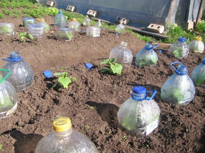 Польза от пластиковых бутылок на даче 3