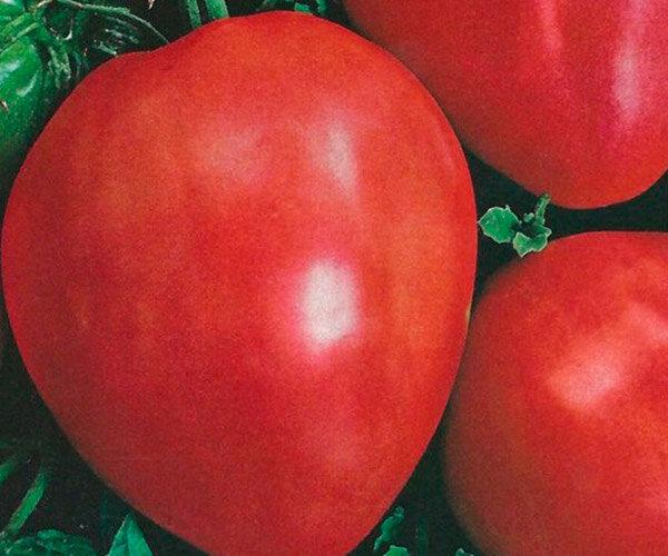 Салатные сорта помидоров для теплиц 2