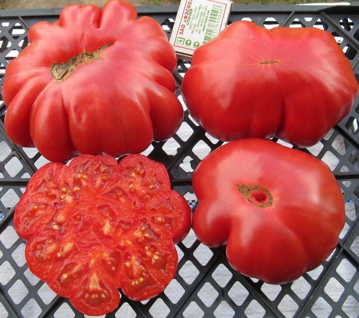 Салатные сорта помидоров для теплиц 5