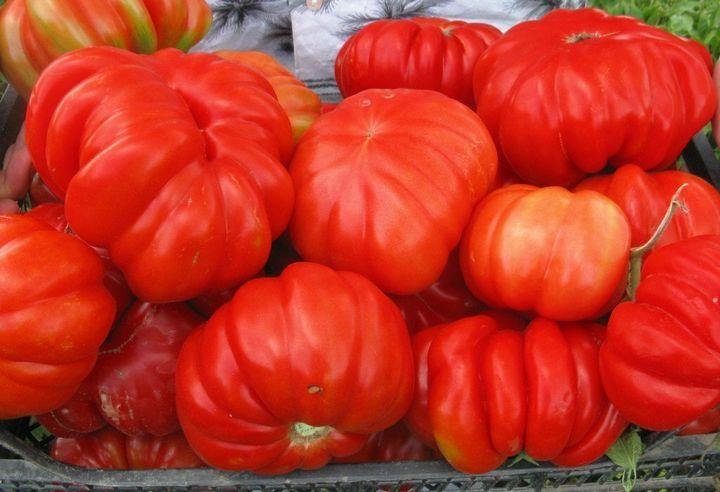 Салатные сорта помидоров для теплиц 6