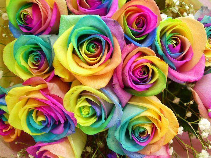 Самые дорогие и редкие цветы в мире 13