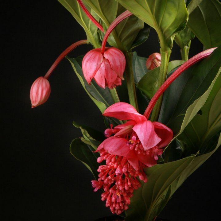 Самые дорогие и редкие цветы в мире 21
