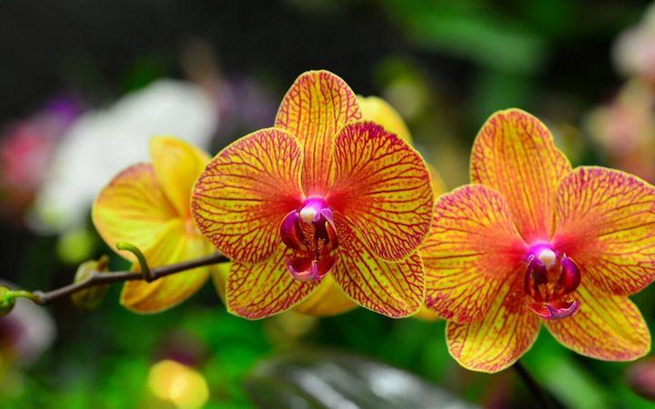 Самые дорогие и редкие цветы в мире 3