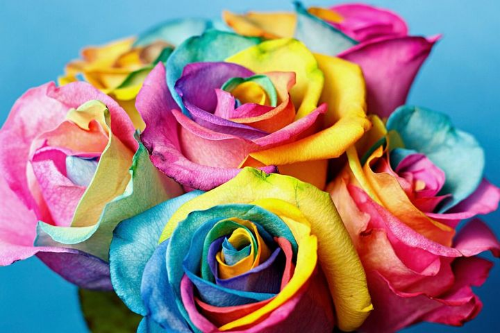 Самые дорогие и редкие цветы в мире 12