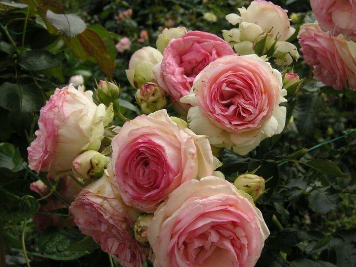 Самые дорогие и редкие цветы в мире 23