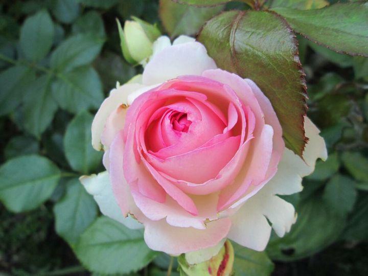 Самые дорогие и редкие цветы в мире 25