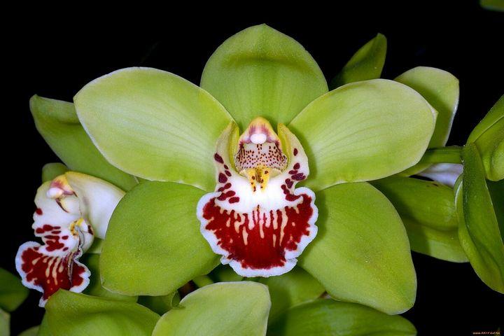 Самые дорогие и редкие цветы в мире 5