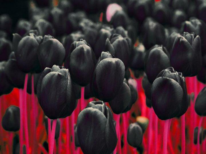 Самые дорогие и редкие цветы в мире 18