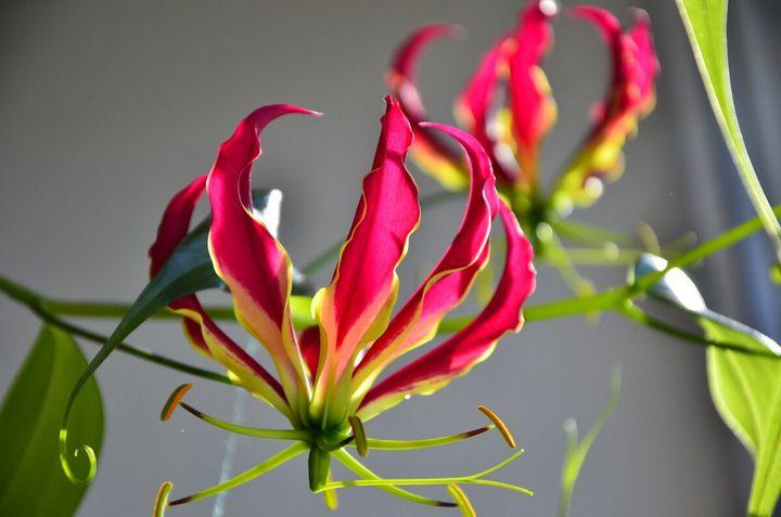 Самые дорогие и редкие цветы в мире 16
