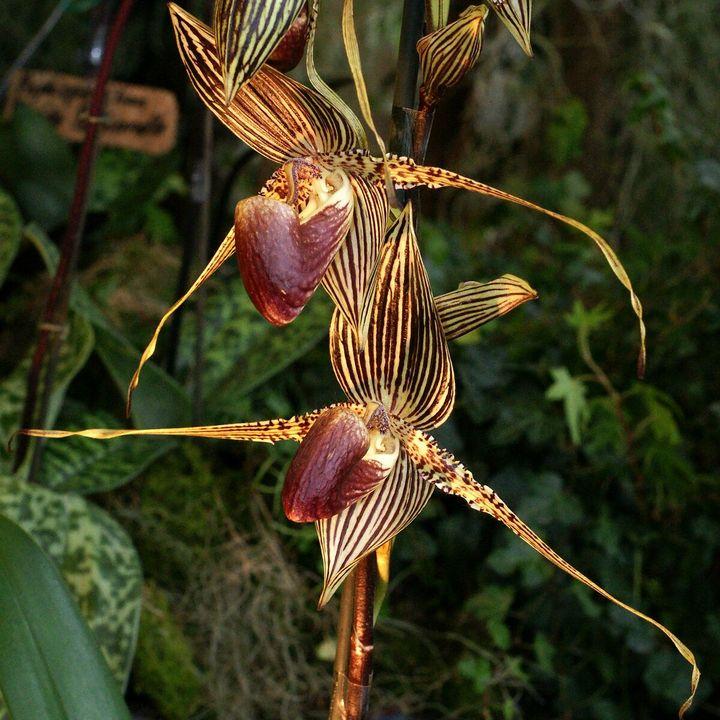 Самые дорогие и редкие цветы в мире 11