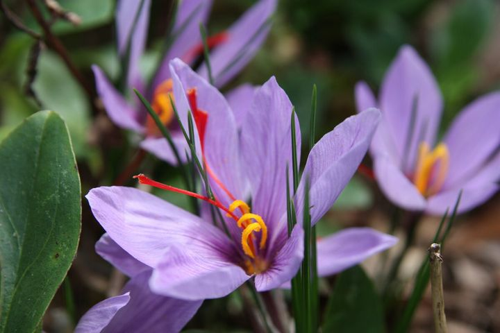 Самые дорогие и редкие цветы в мире 28