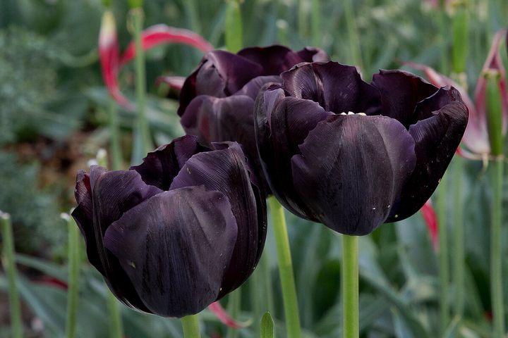 Самые дорогие и редкие цветы в мире 19