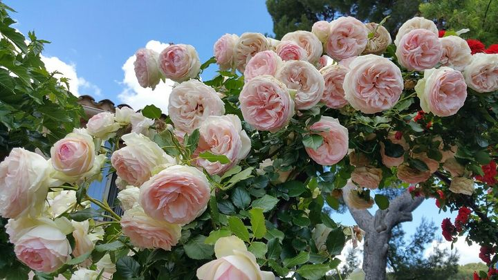 Самые дорогие и редкие цветы в мире 24