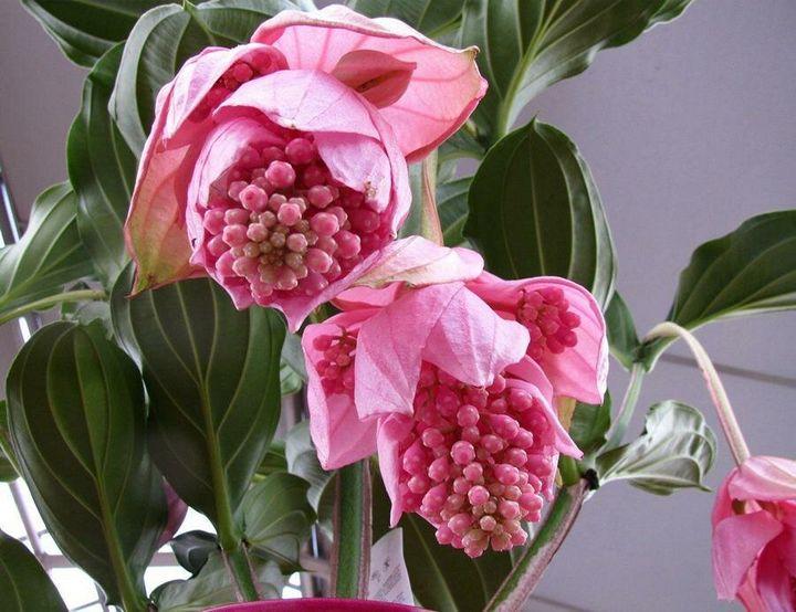 Самые дорогие и редкие цветы в мире 20