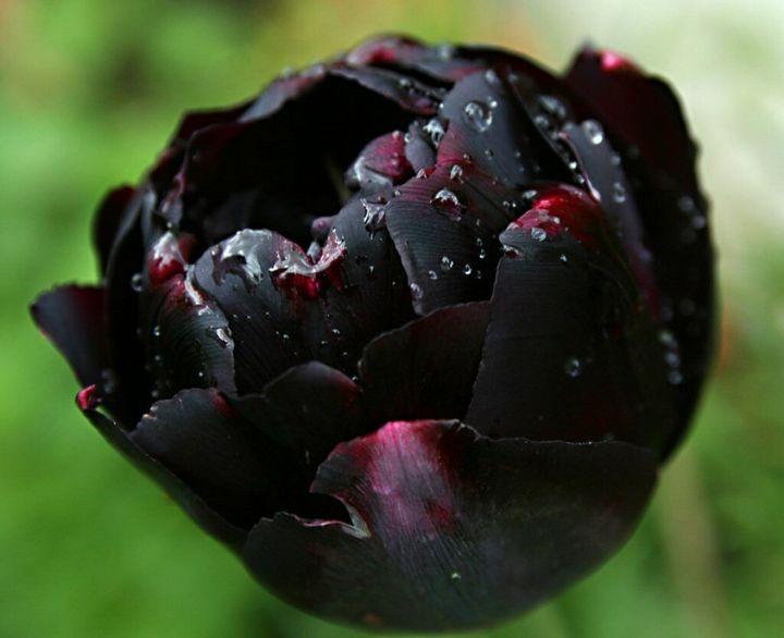 Самые дорогие и редкие цветы в мире 17