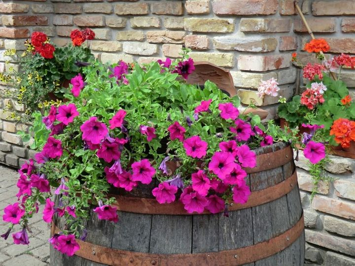 Самые живучие растения для клумб на даче 2