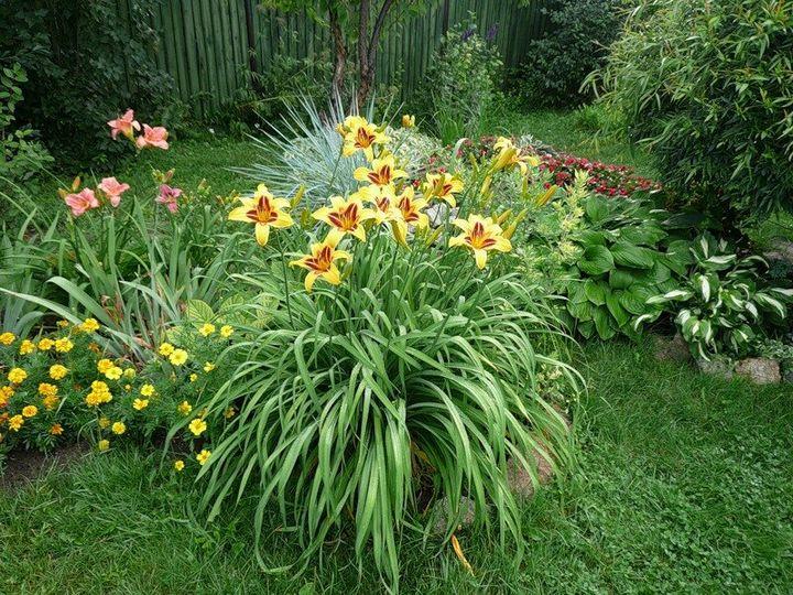 Самые живучие растения для клумб на даче 14