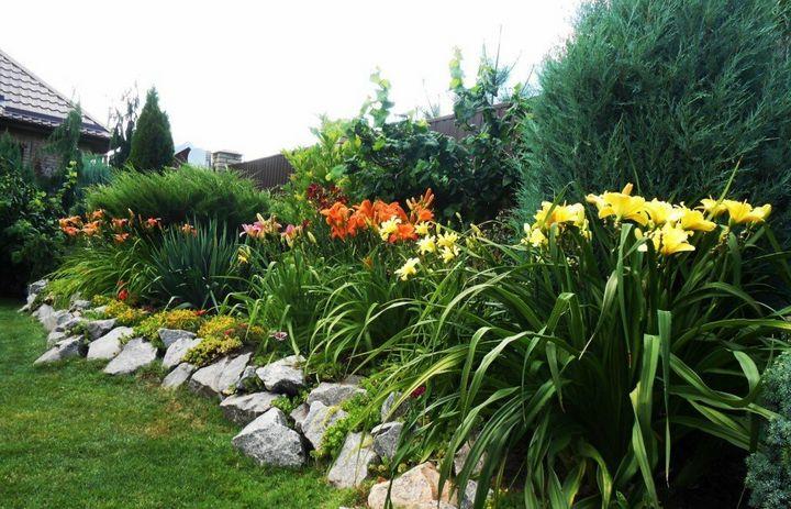 Самые живучие растения для клумб на даче 17