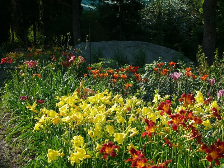 Самые живучие растения для клумб на даче 16
