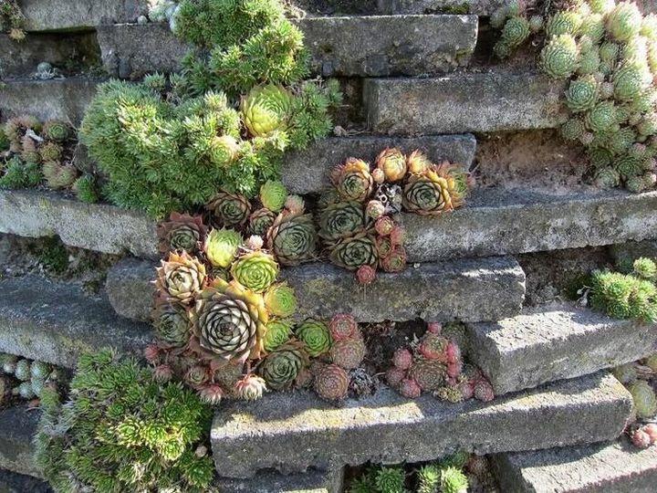 Самые живучие растения для клумб на даче 18