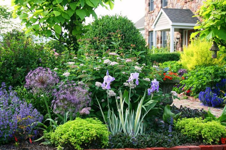 Самые живучие растения для клумб на даче 1