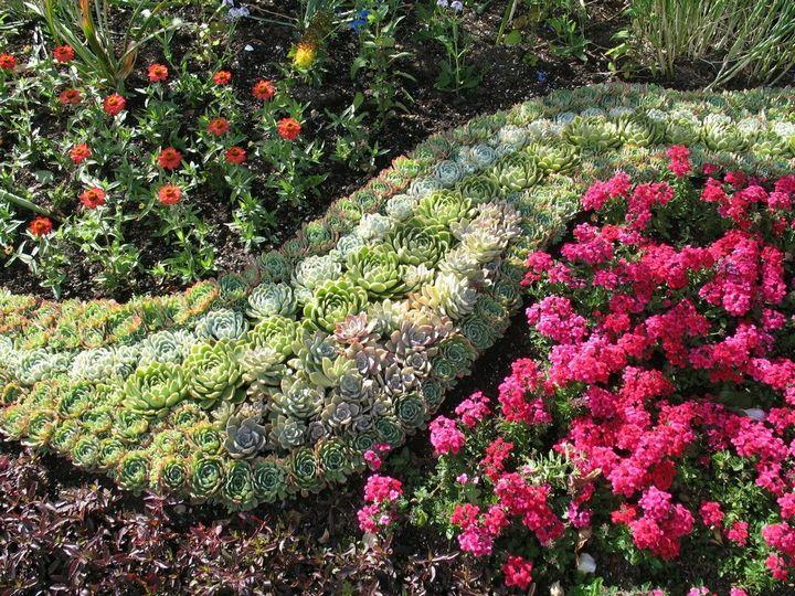 Самые живучие растения для клумб на даче 20