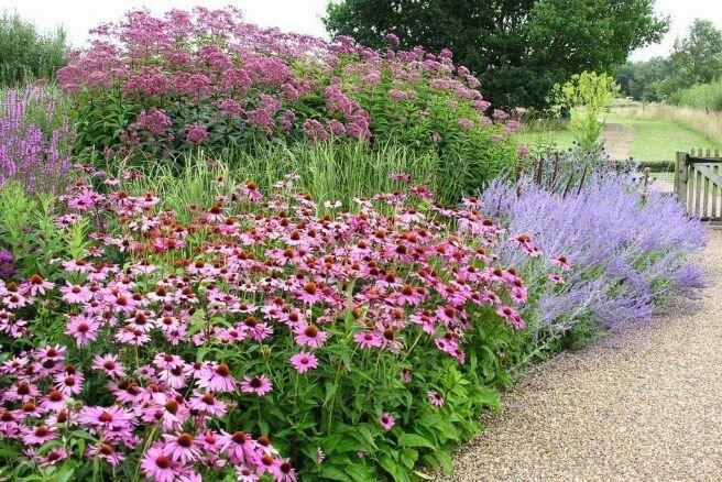 Самые живучие растения для клумб на даче 6