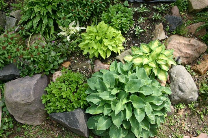 Самые живучие растения для клумб на даче 26