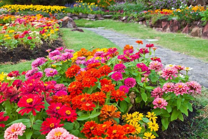 Самые живучие растения для клумб на даче 33