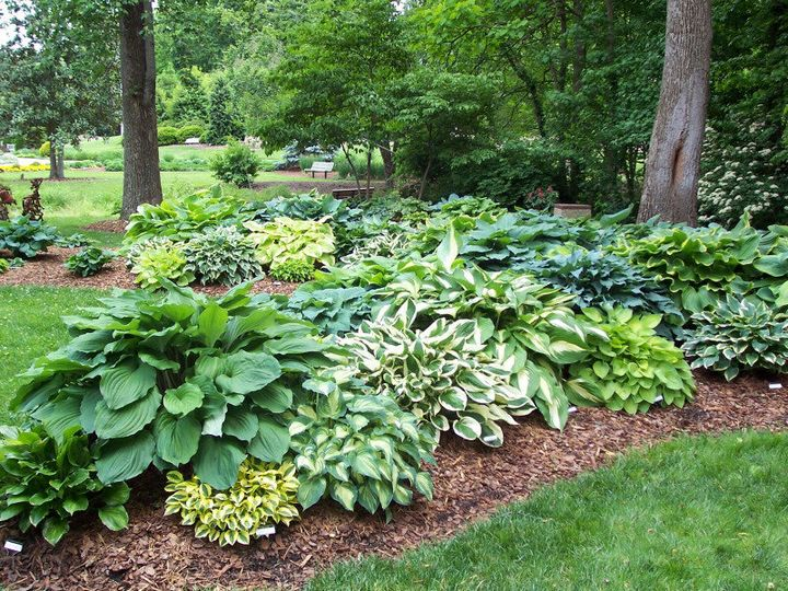 Самые живучие растения для клумб на даче 27