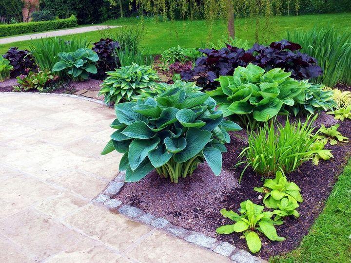 Самые живучие растения для клумб на даче 28