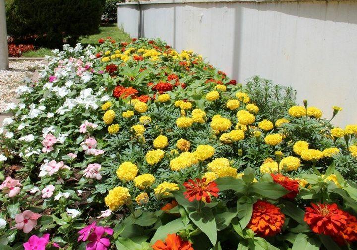 Самые живучие растения для клумб на даче 32