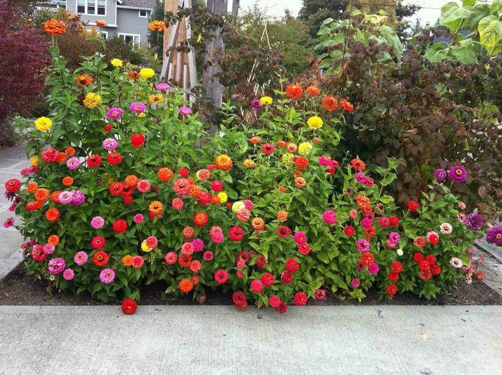 Самые живучие растения для клумб на даче 30